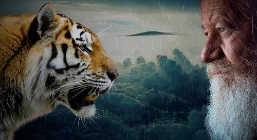tigers  head  animal