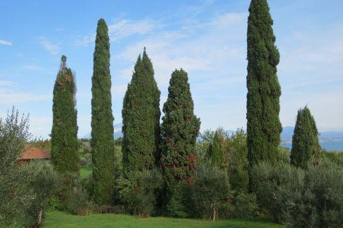 tim trees lake