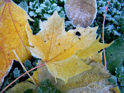 tim h autumn foliage