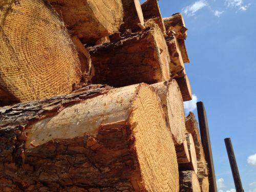 timber logging wood