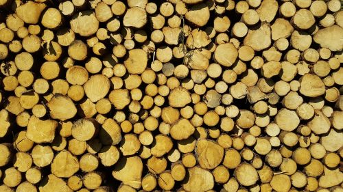 timber harvesting nature forest