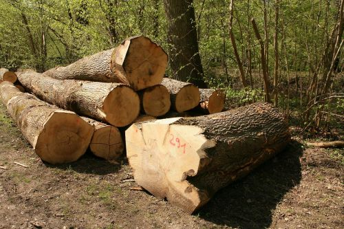 timber industry wood tree trunks