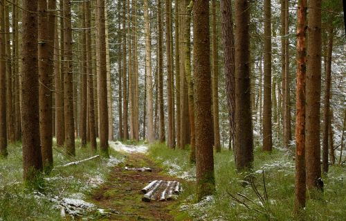 timber industry forestry forest