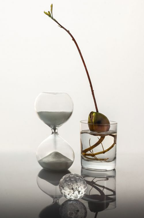 time glass sprout