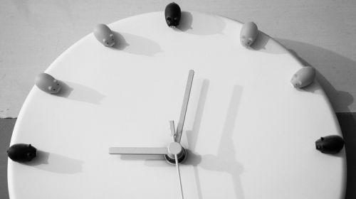 laikas,laikrodis,mažos kiaulės,kiauliena,kiaulės,linksma,dizainas,minutė,valandos,sekundes