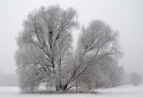 time of year winter tree