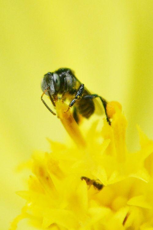 tiny bee bee flower
