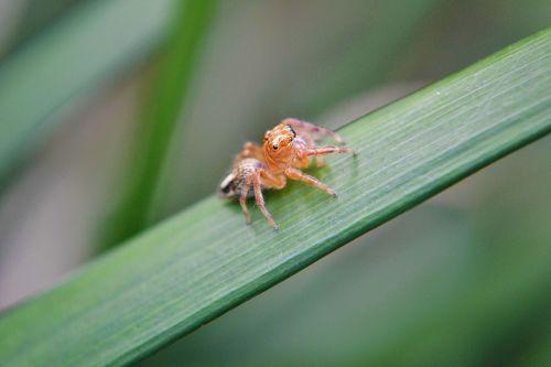 tiny spider spider innocent