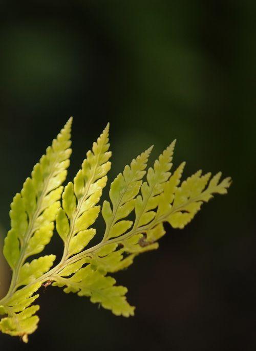 Tip Of Fern Leaf