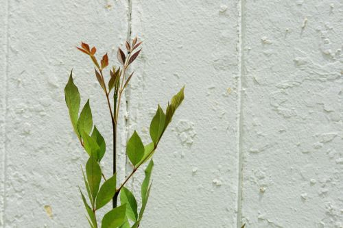 Tip Of Plant Against White Wall