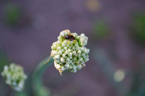 tipster flower macro