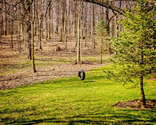 tire tire swing scenery