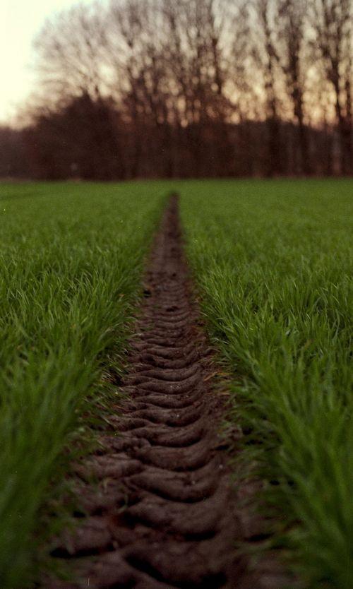 tire path green wheat