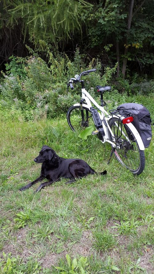 tired electric bicycle dog