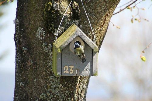 tit  bird  aviary