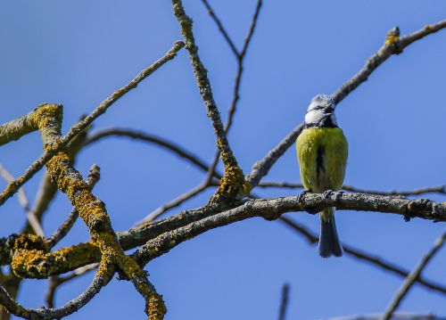 tit bird branch