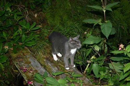 titus cat kitten