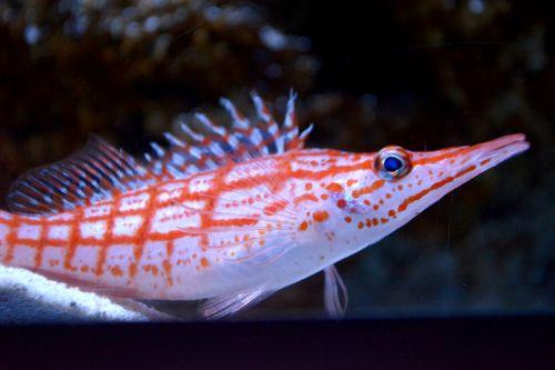 to download gombe aquarium saltwater fish