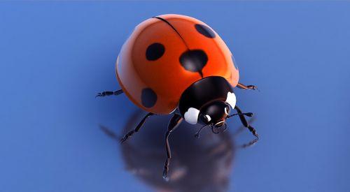 to start beetle lucky ladybug