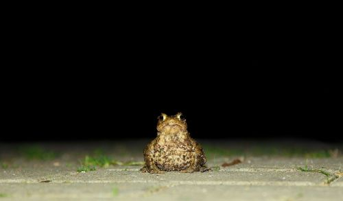 toad nature frog