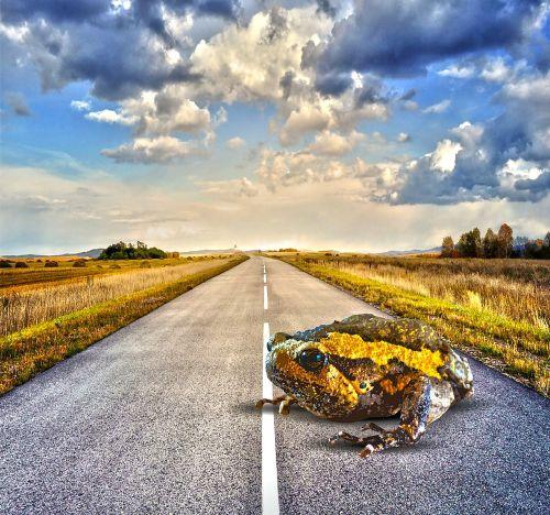 toad road big
