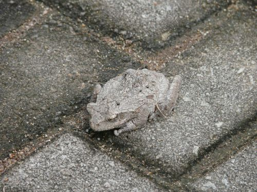 toad camouflage hide