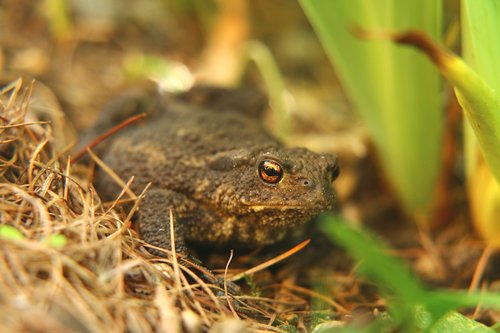 toad  frog  frog eyes