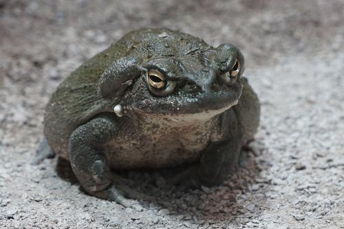 toad zoo terrarium