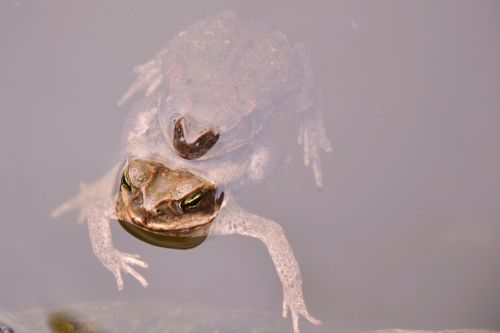 toads frog water