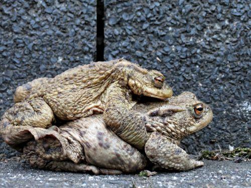 toads hike pair