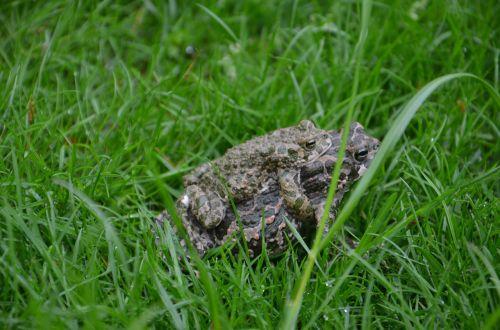 toads grass love