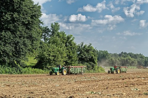 tobacco  harvest  tractors