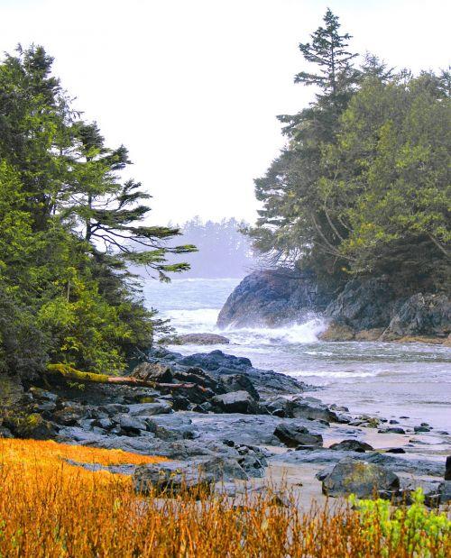 tofino west coast canada