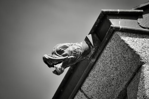 Roof And Gutter