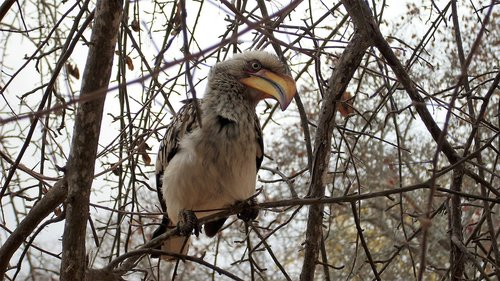 toko  bird  safari