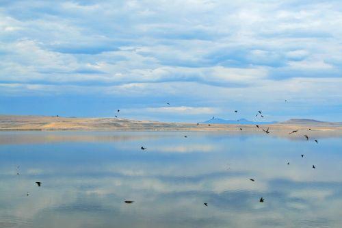 tom great salt lake salt lake city