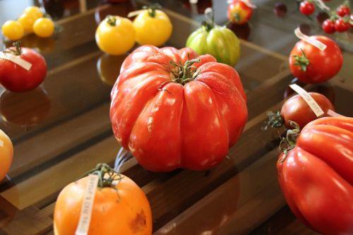 tomato tomatoes ripe