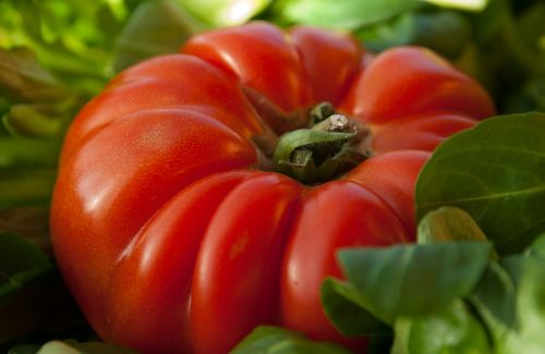tomato vegetable beef heart
