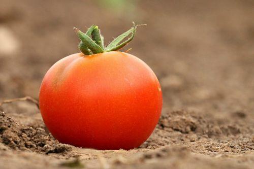tomato red diet