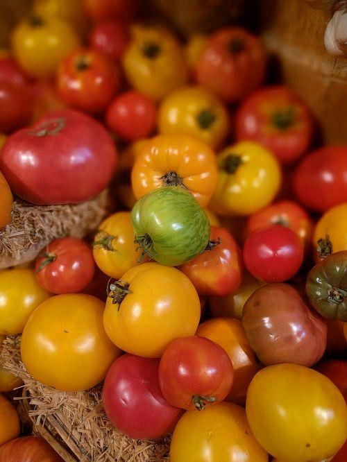 tomato vegetable fresh