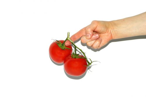 tomato the hand hands