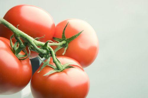 tomato red bush tomato