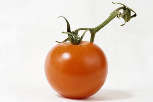 tomato bush tomato panicle