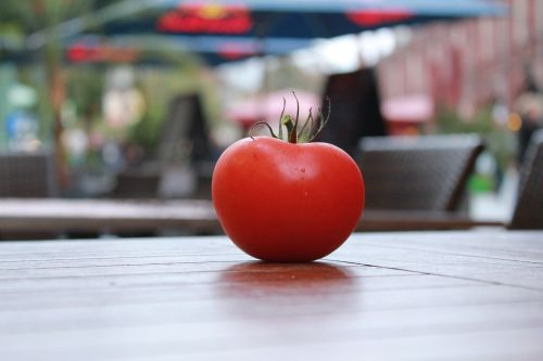 tomato tomatoes red