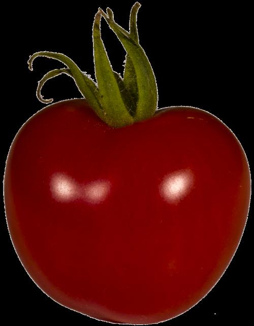 tomato grown solanum lycopersicum