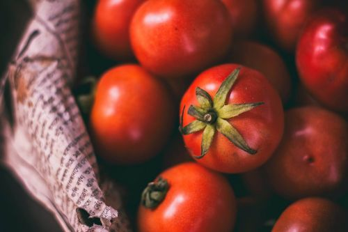 tomato crops vegetable