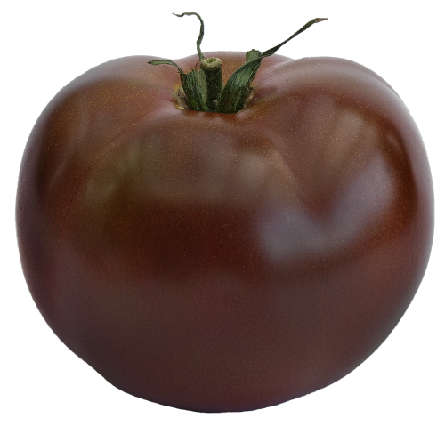 tomato black tomato variety zebrino