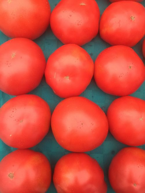 tomato tomatoes fresh