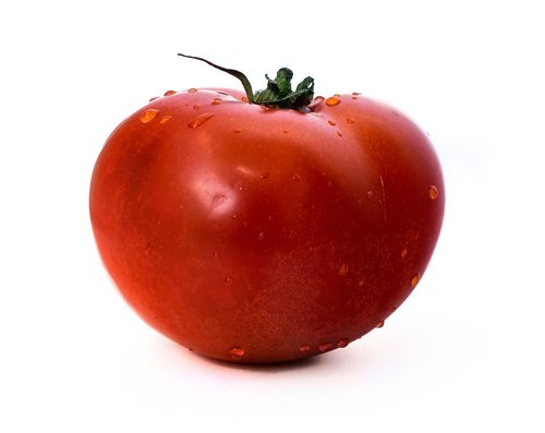 tomato  on a white background  tomatoes