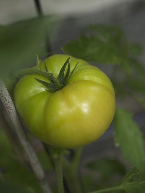 tomato  fruit  fresh food